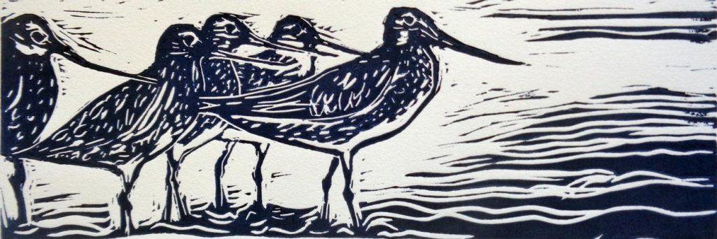 BA Breen_Bar-tailed Godwits