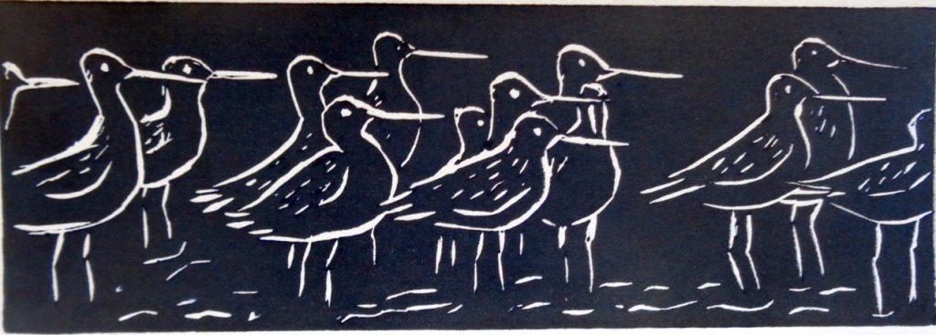 BABreen_Bar-tailed Godwits