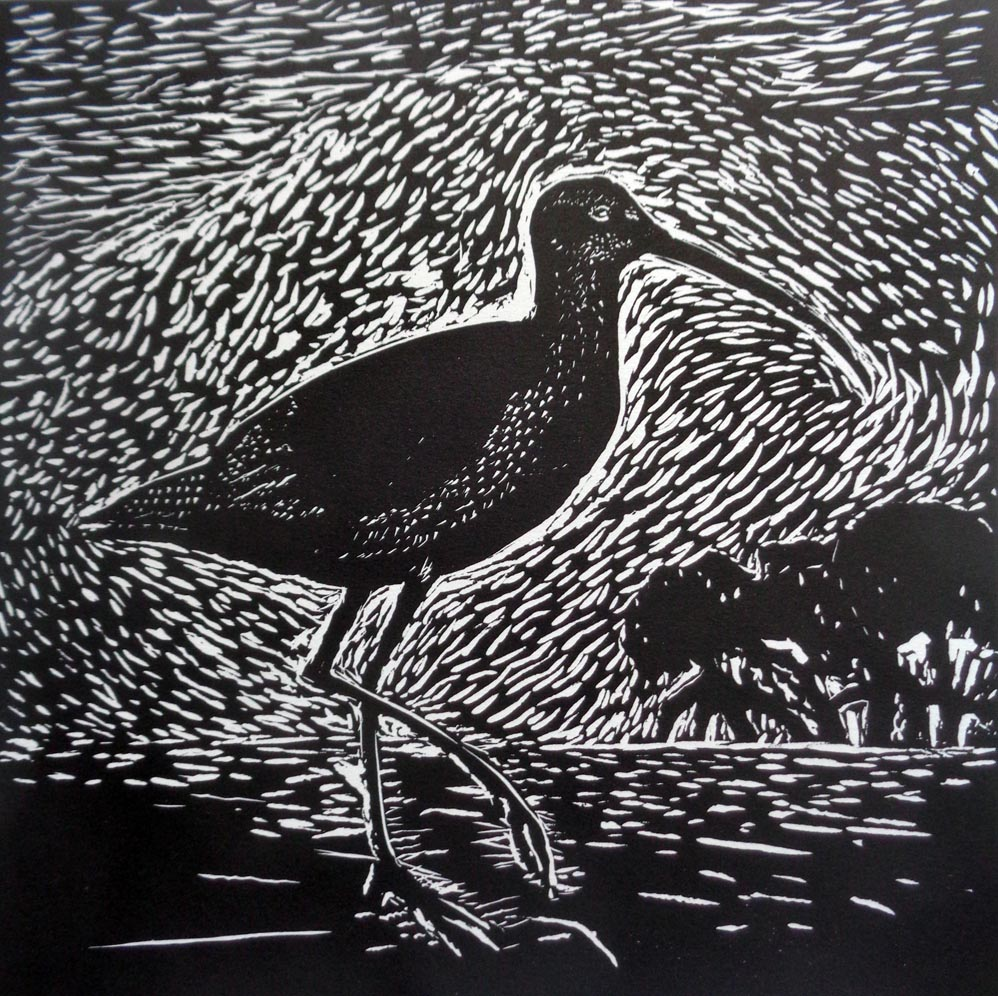 Jill Quirk_Endangered Eastern Curlew